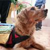 Remi perro de terapia portada